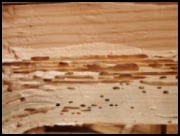 traitement du bois contre les capricorne valais vaud suisse. Black Bedroom Furniture Sets. Home Design Ideas